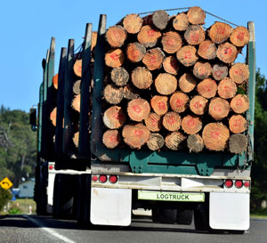 Compensation order for forestry company could be tip of the iceberg