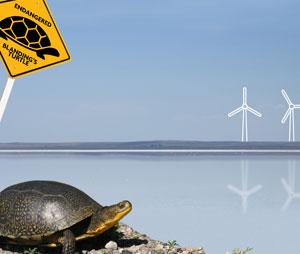 When turtles trump turbines