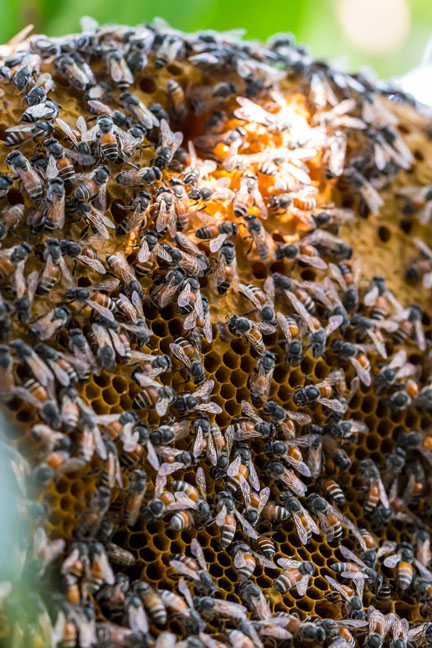 A decision in a commercial beekeepers class action has highlighed an existing approach on the liability of public authorities 'that makes no sense.'